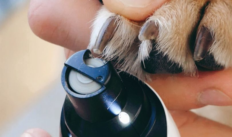 Dog Nail Grinders with Guard