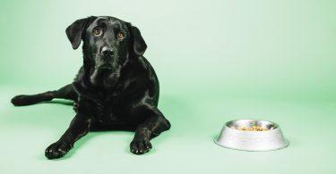 Senior Dog Foods-min