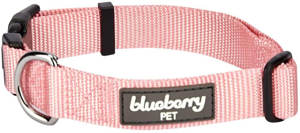 blueberry pet