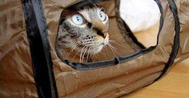 cat-tube